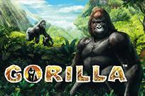 Gorilla игровые аппараты в клубе Вулкан